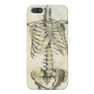 Skeleton Anatomical Art iPhone 5 Covers