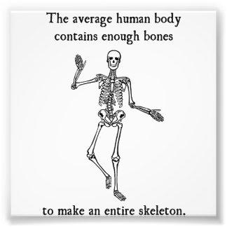 Skeleton Bones in the Average Human Body Photograph