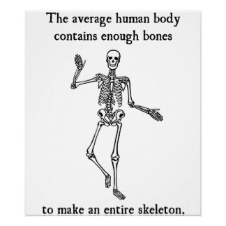 Skeleton Bones in the Average Human Body Poster