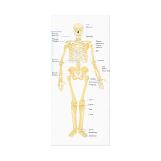 Skeleton Chart Gallery Wrapped Canvas