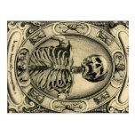 Skeleton, Goth, Mediaeval Postcard