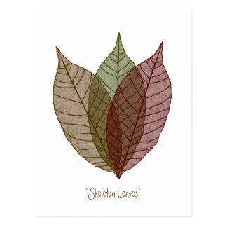 Skeleton Leaves Postcard