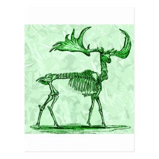 skeleton moose postcard