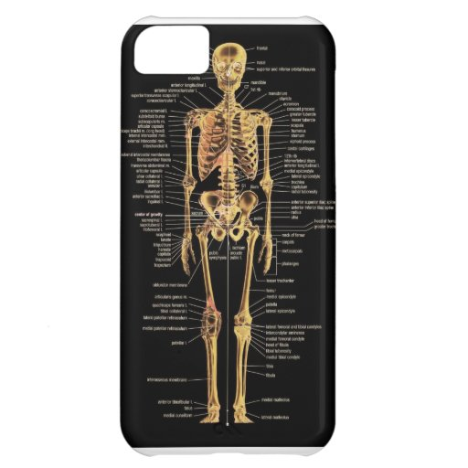 Skeleton phone cover cover for iPhone 5C