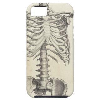 Skeleton Torso iPhone 5 Cover