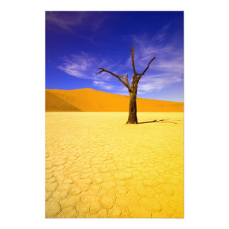 Skeleton trees in Dead Vlei Sossusvlei, Photo Print