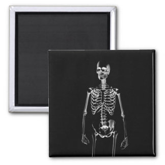 Skeleton X-Ray 2 Inch Magnets