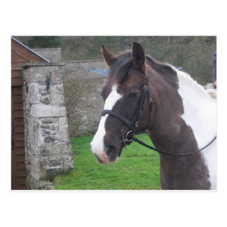 Skewbald Pony Postcard