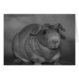 Skinny Pig in black and White Card