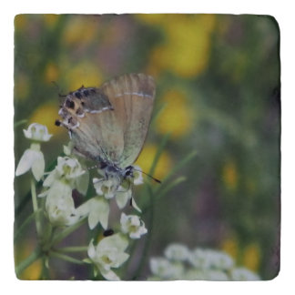 skipper butterfly on a flower trivet