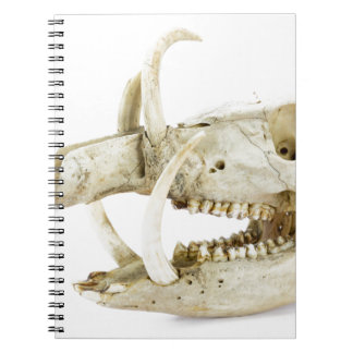 Skull of wild boar spiral notebooks