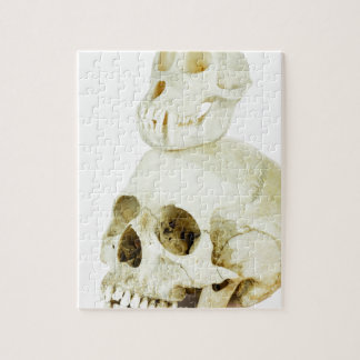 Skulls of human and ape on top jigsaw puzzle