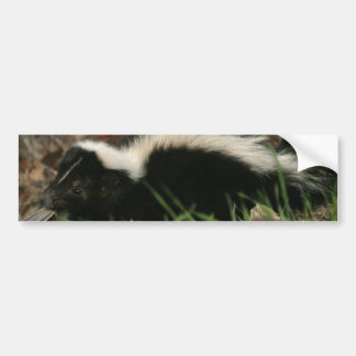 Skunk Behavior  Bumper Stickers