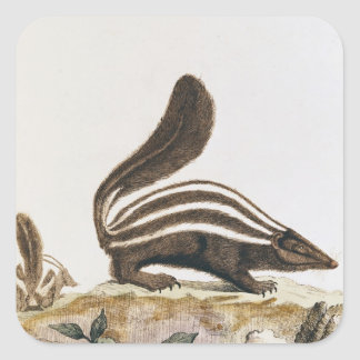 Skunk, from 'Histoire Naturelle' by Square Sticker