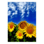 Sky and bloom, profile cards business card