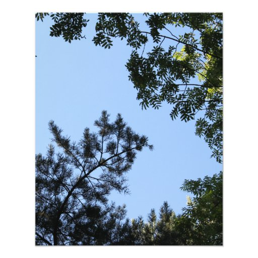 Sky and Tree Tops. Flyers