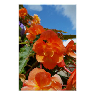 sky, flowers and bee poster