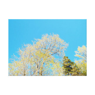 Sky From Below Canvas Print