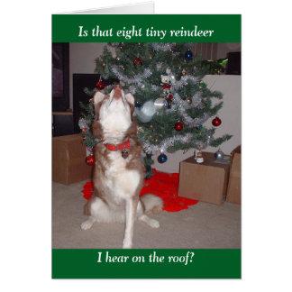 Skye's Merry Christmas Card