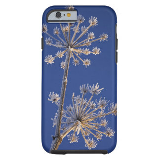 Skyward view of Cow Parsnip in winter covered in Tough iPhone 6 Case