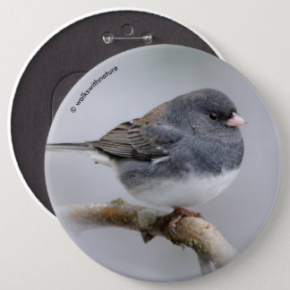 Slate-Colored Dark-Eyed Junco on the Pear Tree 6 Cm Round Badge
