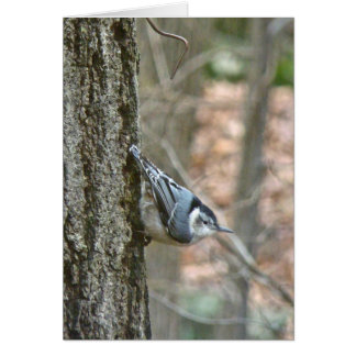Slate Gray Nuthatch Songbird Coordinated Items Card