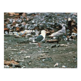 Slaty-backed Gull, Attu 1985 Postcard