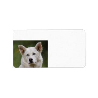 sled dog address label