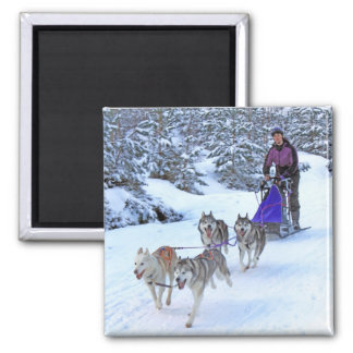 Sled Dog Racing Square Magnet