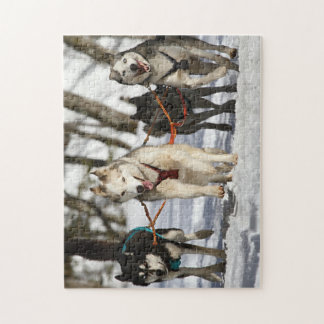 Sled Dogs Jigsaw Puzzle