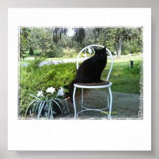 Sleek Black Cat Outdoors Posters