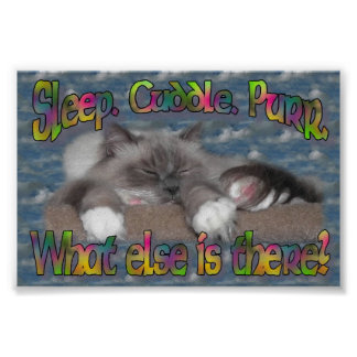 Sleep, cuddle, purr! poster
