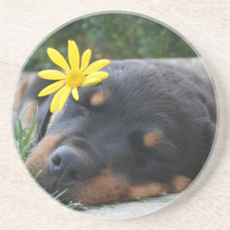 Sleep Puppy  with Flower Beverage Coasters