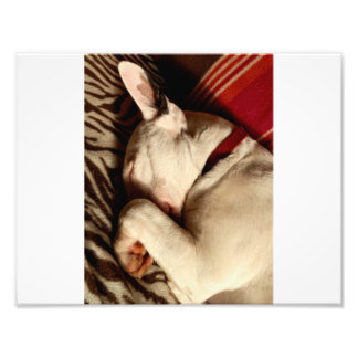 Sleep Tight Photo Print