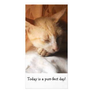 Sleeping Asian Ginger Cat by the Window-Photo_Card Personalised Photo Card