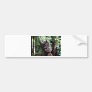 Sleeping Baby Koala Bumper Sticker