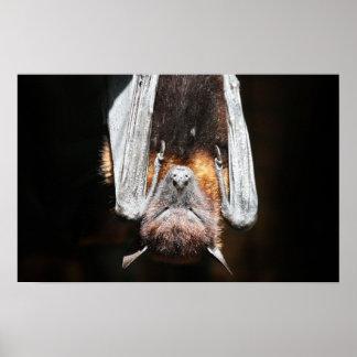 Sleeping Bat Posters