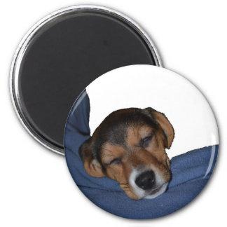 Sleeping Beagle Puppy Magnet