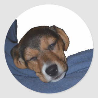 Sleeping Beagle Puppy Sticker