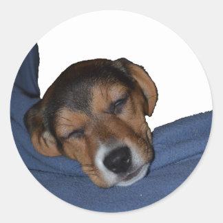 Sleeping Beagle Puppy Sticker