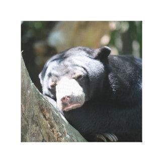 Sleeping Bear Canvas Prints