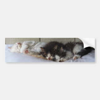 Sleeping Beauties Bumper Sticker