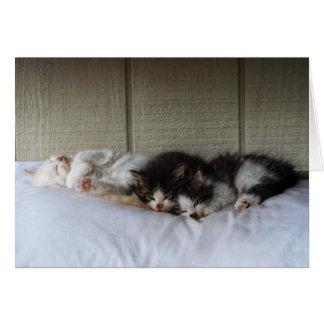 Sleeping Beauties Card