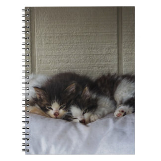 Sleeping Beauties Notebooks