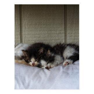 Sleeping Beauties Postcard