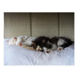 Sleeping Beauties Postcard