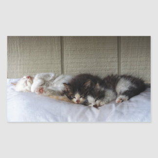 Sleeping Beauties Rectangular Sticker