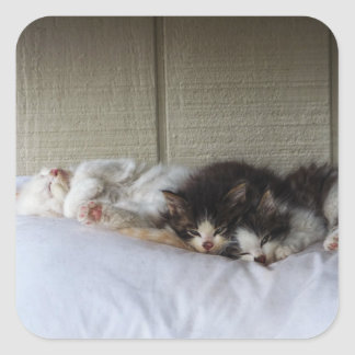 Sleeping Beauties Square Sticker