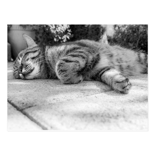 Sleeping black and white cat postcard