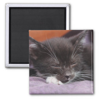 SLEEPING BLACK AND WHITE KITTEN MAGNET